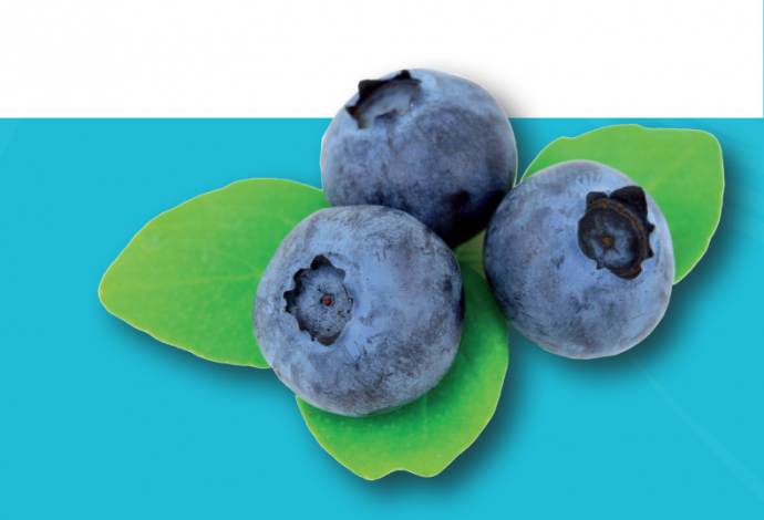 b_690_0_16777215_00_images_acties_blueberryspecialcosmedischambachtkampen.png